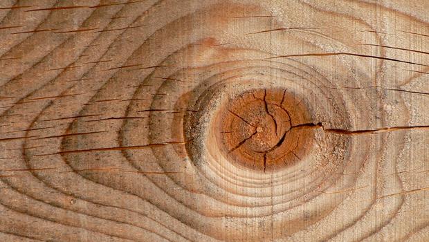 la madera un material sustentable