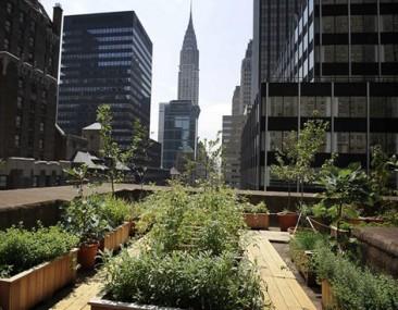 La granja urbana está cultivando un futuro verde