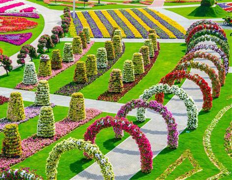 Miracle Garden: el jardín de flores más grande y colorido del mundo