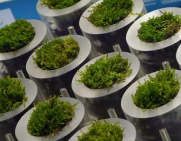 Moss Biophotovoltaic: la mesa-lámpara que se enciende gracias a las algas