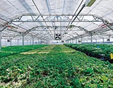 Primer invernadero comercial a gran escala se inaugurará este año en Nueva York