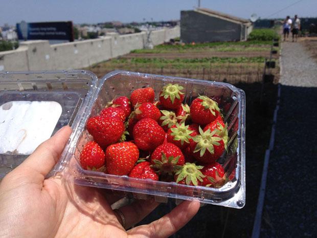 Brooklyn Grange Farm: la granja en tejado más grande del mundo