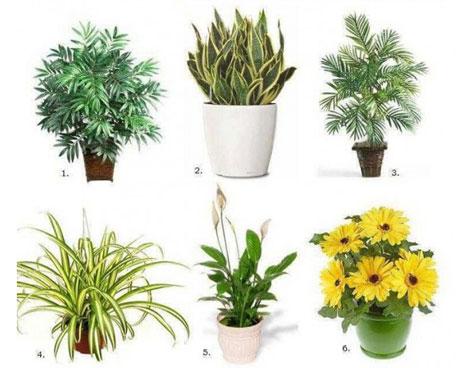 Seis plantas de interior que limpian el ambiente abilia for Plantas de interior limpian aire