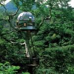 Maravillosas casas de árboles