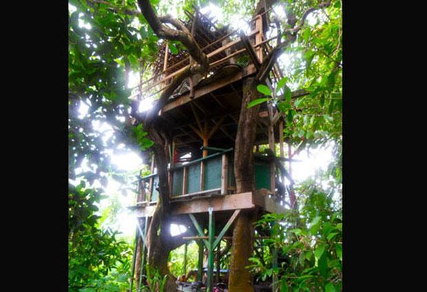 Maravillosas casas de rboles abilia i blog i conciencia - Arboles de interior ...