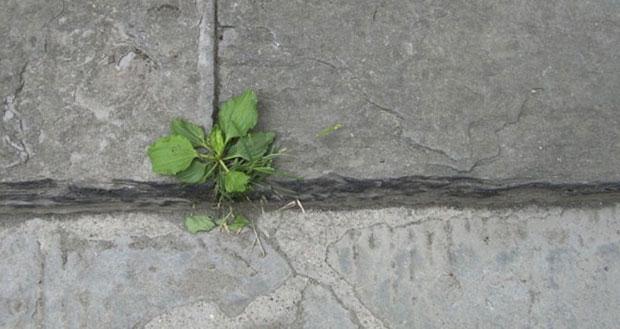 De residuos orgánicos a concreto