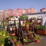 ¿Cómo hacer un huerto urbano en un departamento?