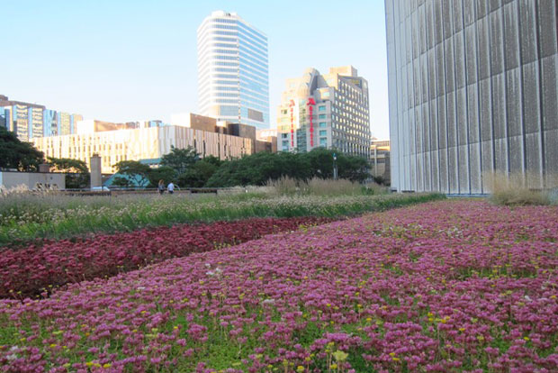 Los techos verdes invaden Toronto