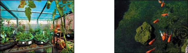 La azotea verde mas grande de latinoamerica está en México