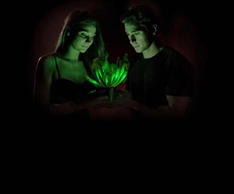 Starlight Avatar: una planta que brilla en la oscuridad
