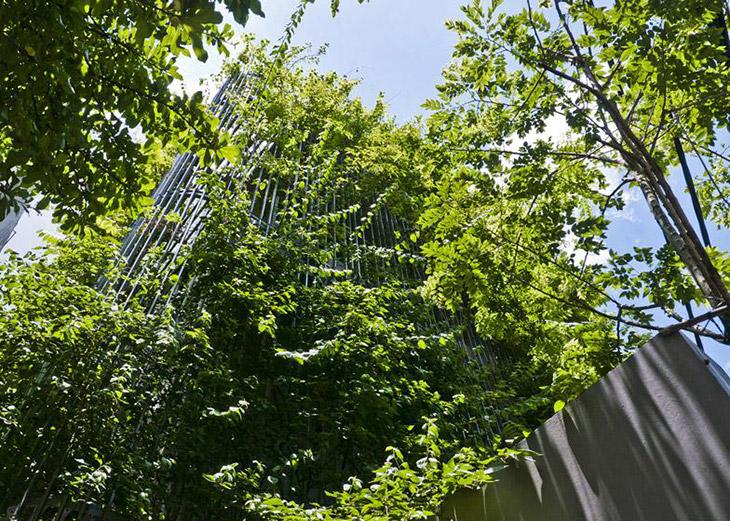 Green Renovation: incorporando la naturaleza en una reforma