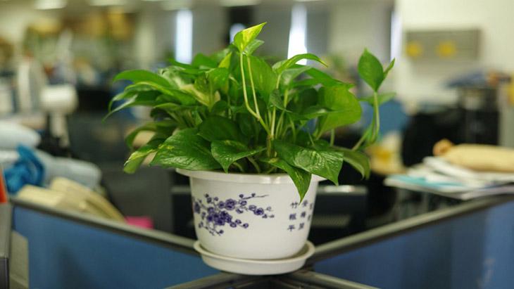 Tener plantas en la oficina aumenta la felicidad de los empleados