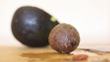 Mexicano crea bioplástico a partir de semillas de aguacate