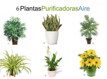 Seis plantas de interior que limpian el ambiente