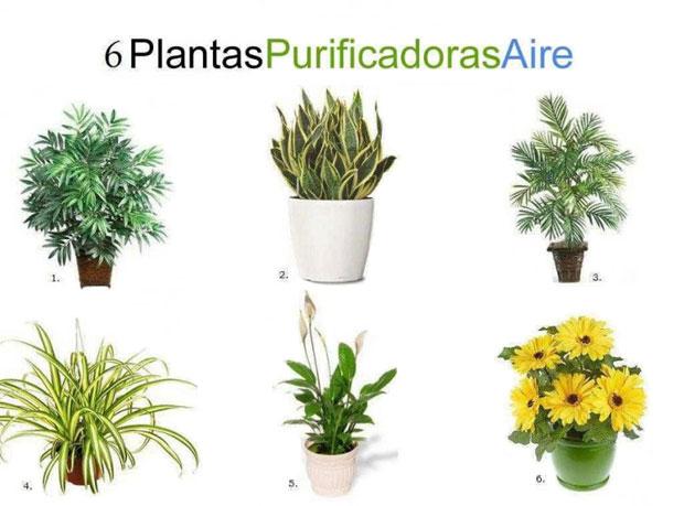 Seis plantas de interior que limpian el ambiente abilia for Cuales son las plantas para interiores